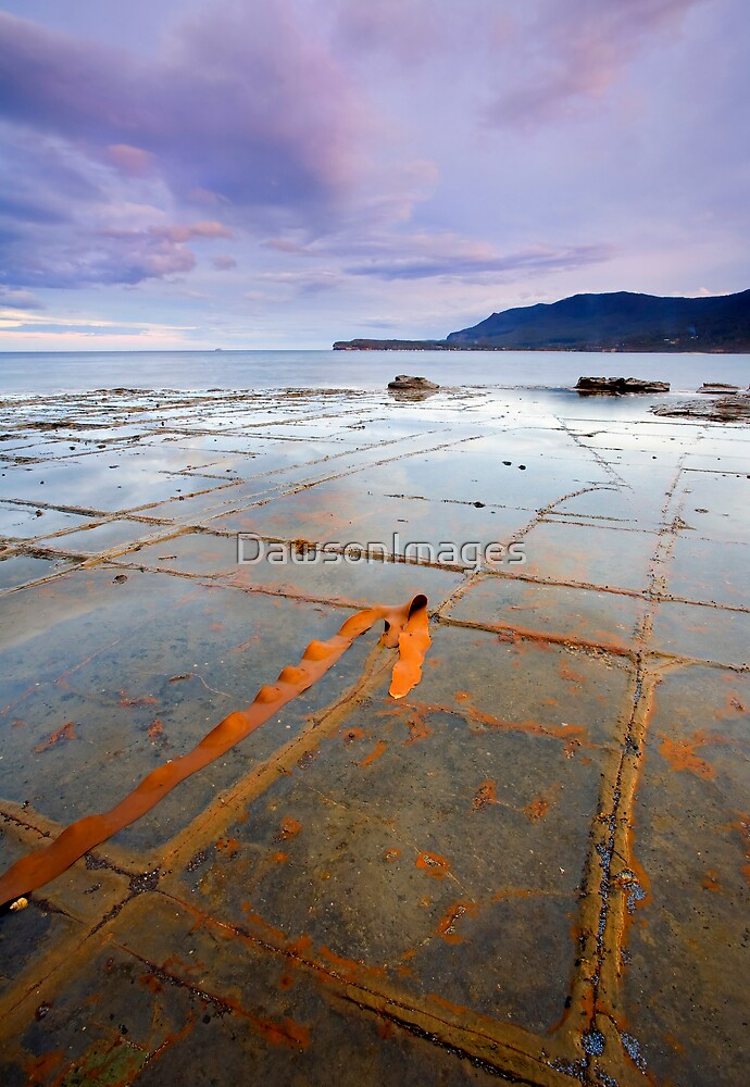 The Grid by DawsonImages