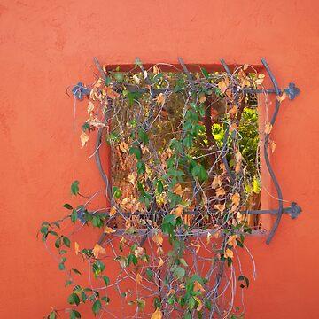 Garden Window by davfoto