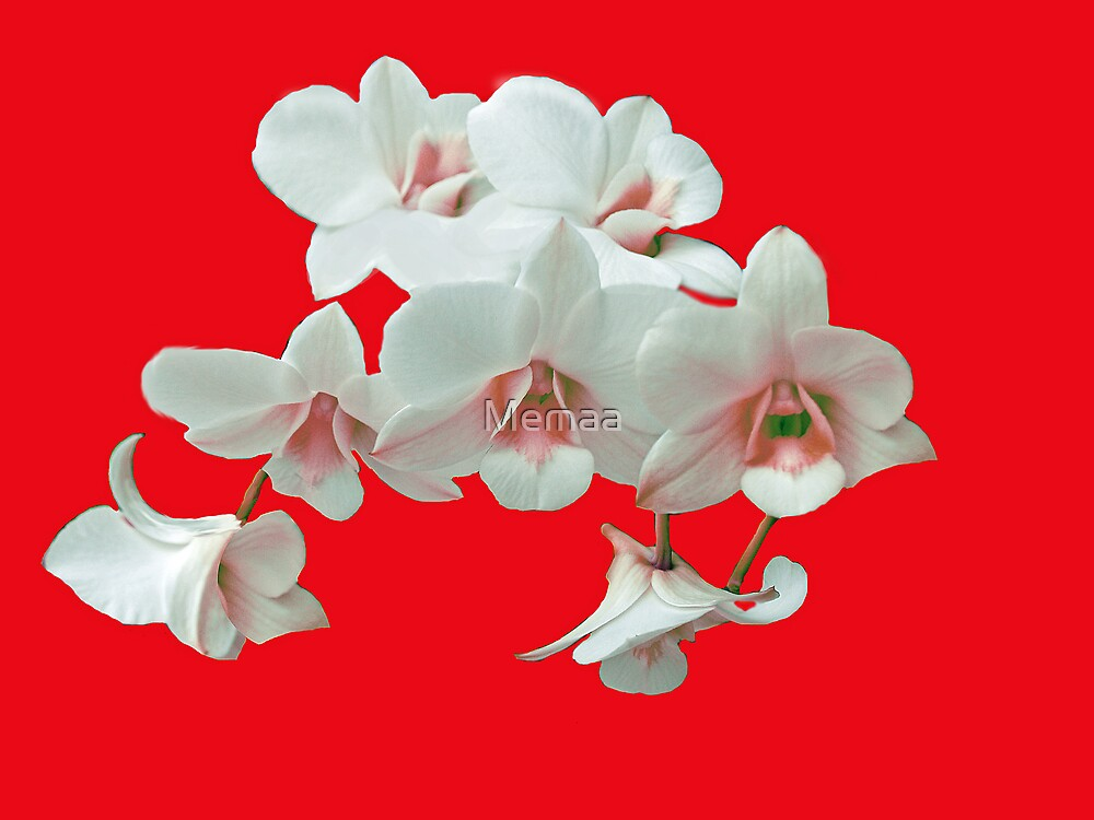Christmas Orchid by Memaa