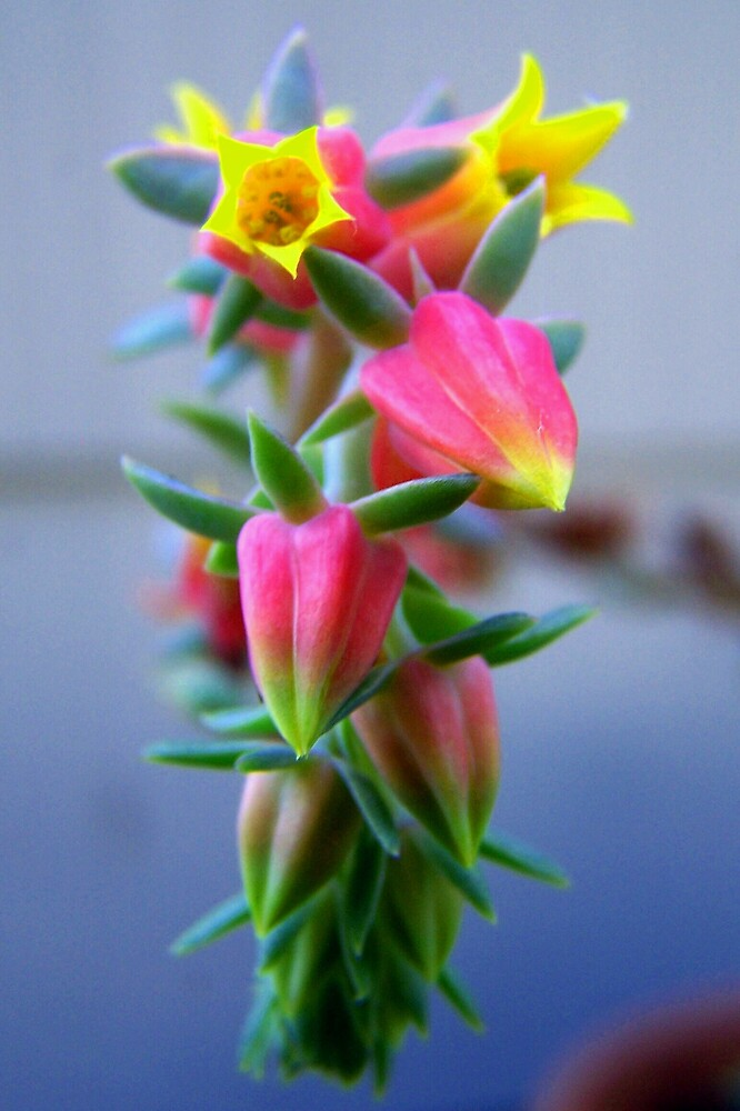 Candy Corn Flower by madmac57
