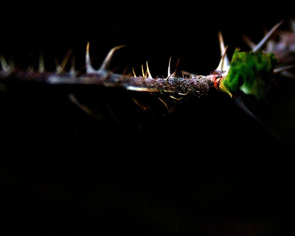 prickles by lbriem