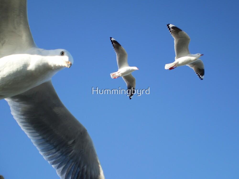 Flying seagulls by Hummingbyrd
