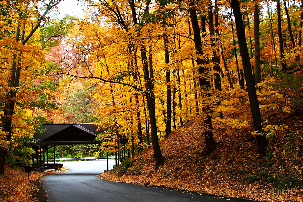 Autumn Drive by Linli  Ng