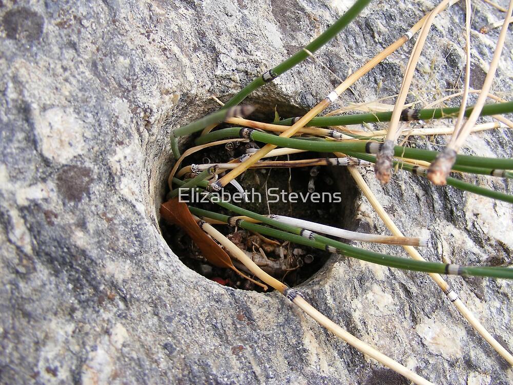 Dynamite Hole! by Elizabeth Stevens