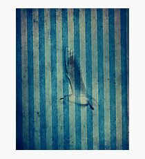 seagull in cyan Photographic Print