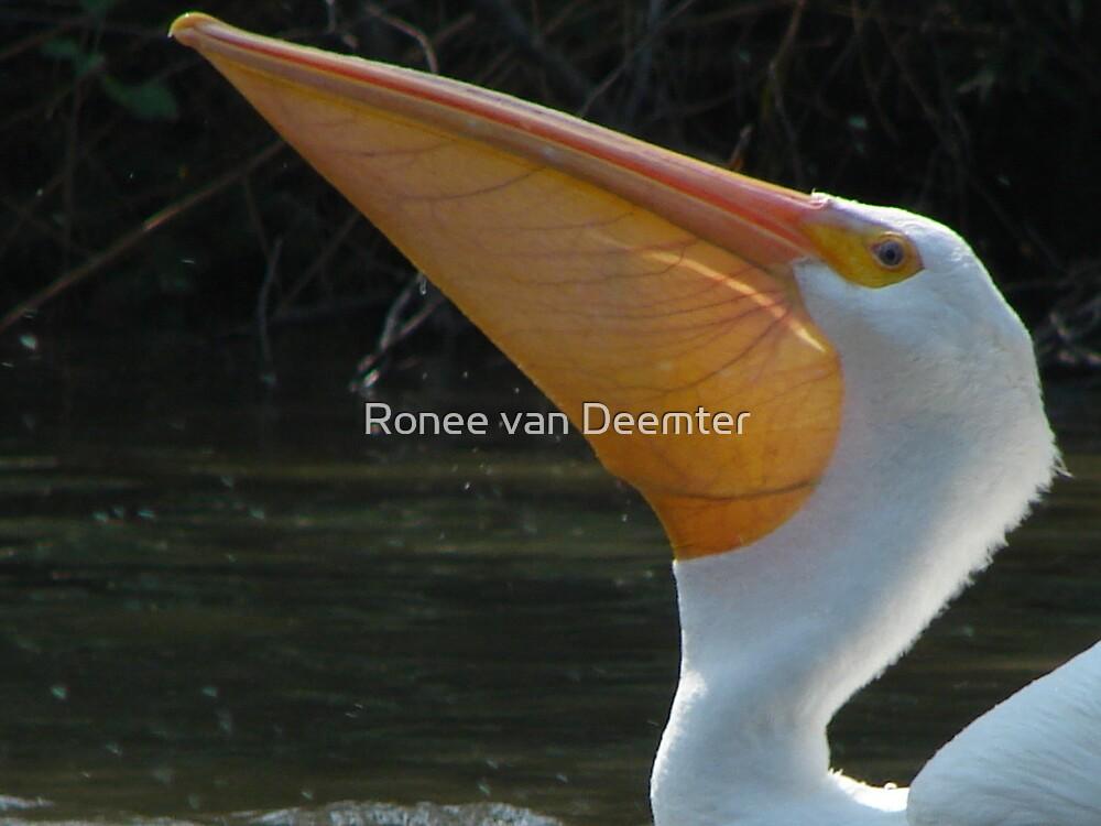 Elegance in the water by Ronee van Deemter