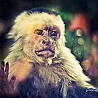 The Hopeless Ape by Stwayne