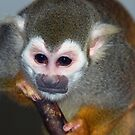 Little Monkey by TJ Baccari Photography