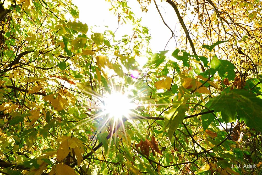 Shining through Autumn by J. D. Adsit