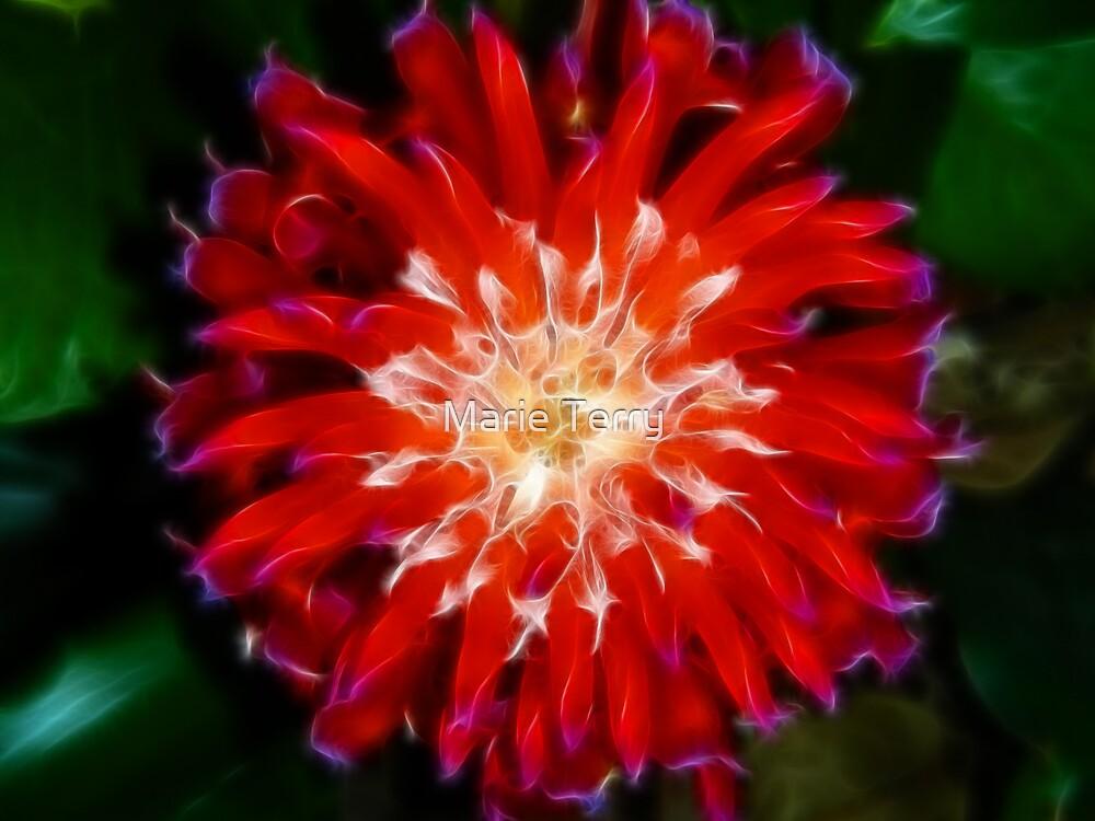 Bromeliad Bloom by Marie Terry