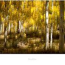 Aspen tree forest in Boulder by Jacinthe Brault