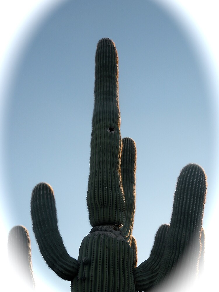 Arizona Beauty by Bonnie Pelton