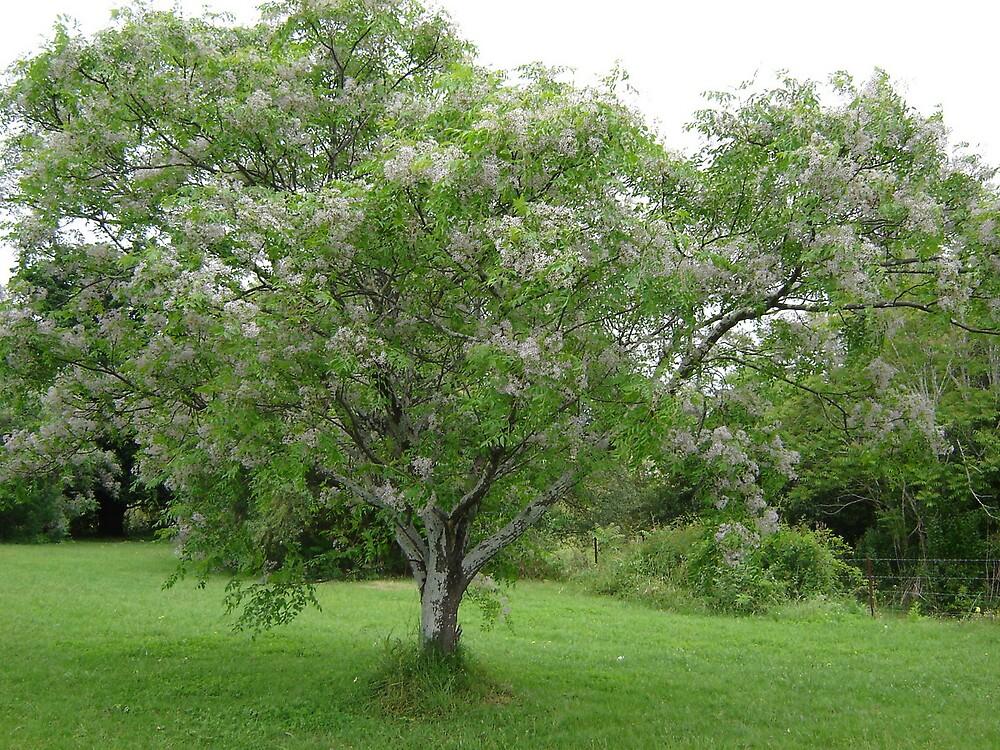 Flowering Tree by the6tees