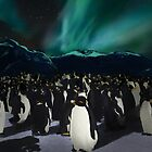 Penguins under the southern lights by Nagore Rementeria