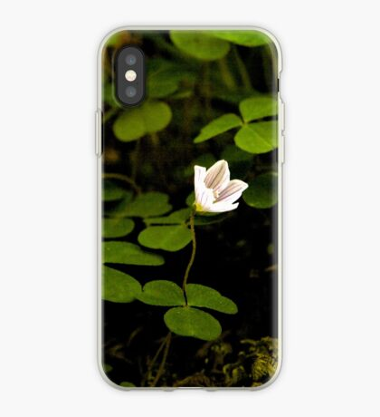 Wood Sorrel, Ness Woods, County Derry iPhone Case