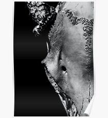 Whitetail Deer Skull 1 - Right Poster