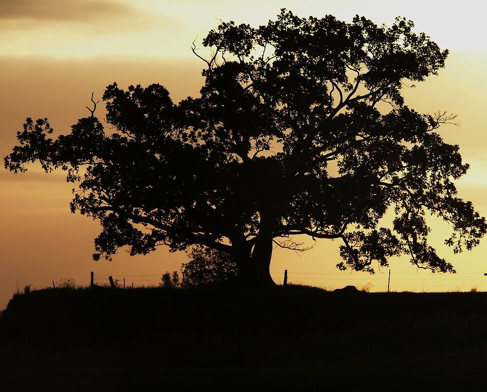 Tree Silhouette by Tim Everding
