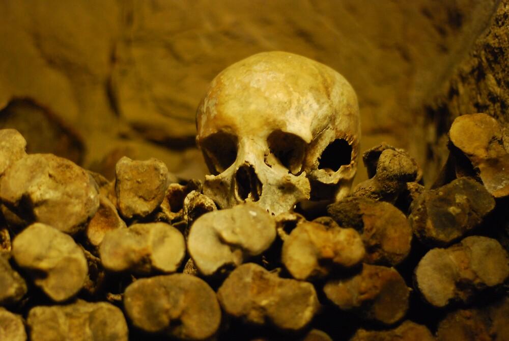 Single Skull by Fiasco