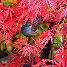 Small garden birds by missmoneypenny