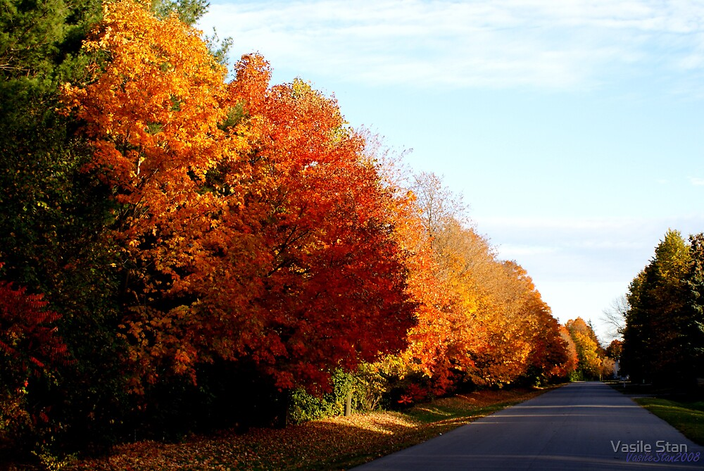 The colours of fall 2008 - 2 by Vasile Stan