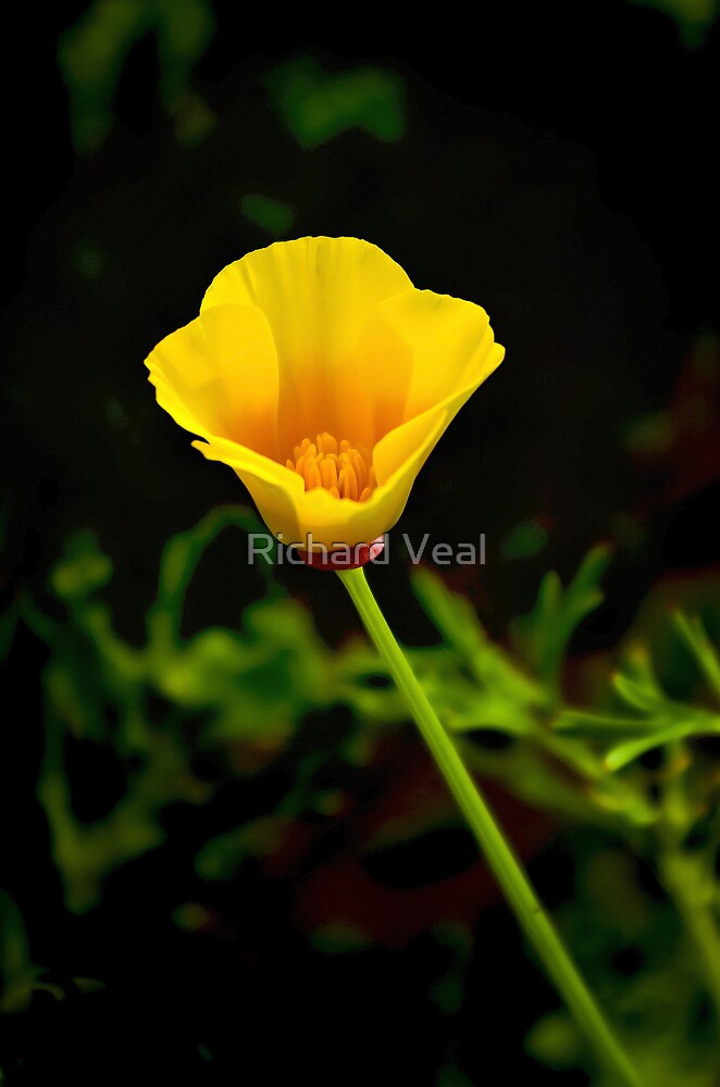 Little Yellow by kcphotography