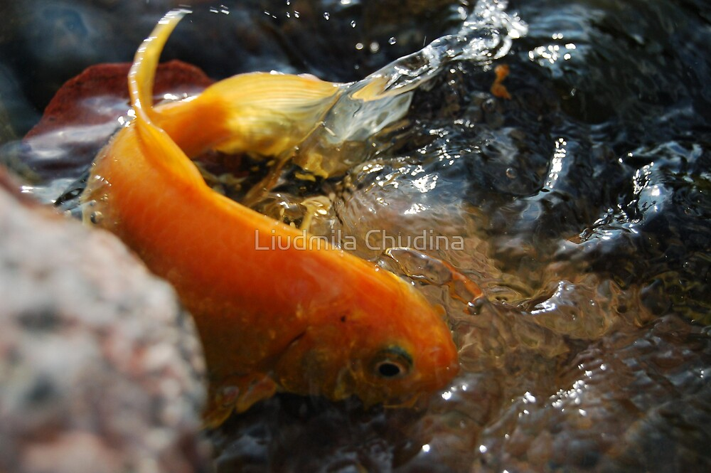 UpClose Fish by MiLa