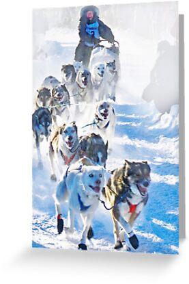 Yukon Quest start 2009 in Whitehorse, Yukon by Yukondick
