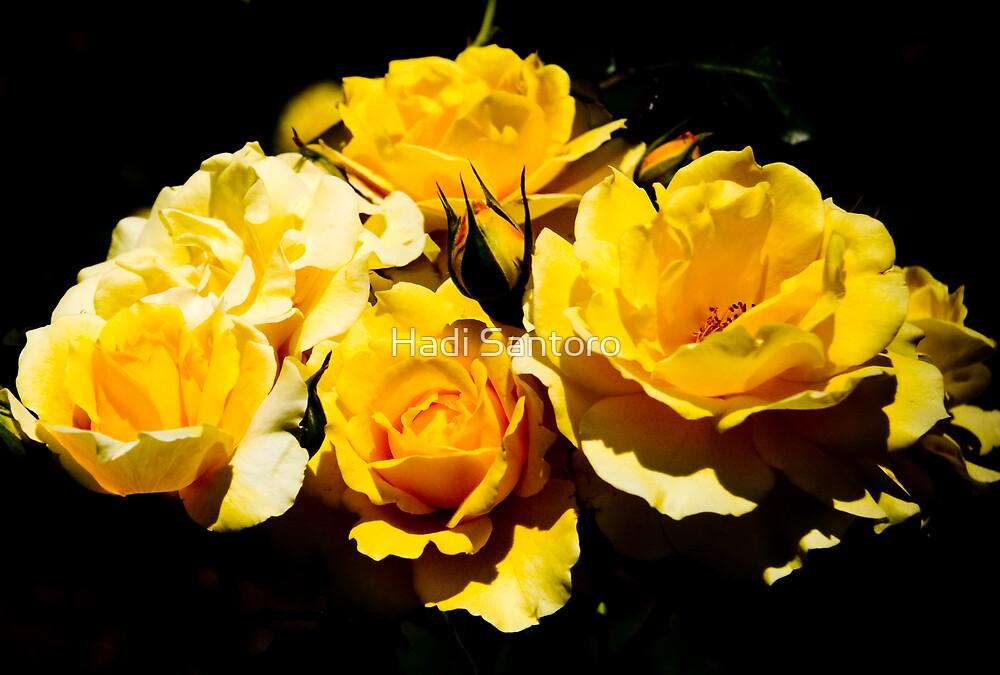 Yellow Roses by Hadi Santoro