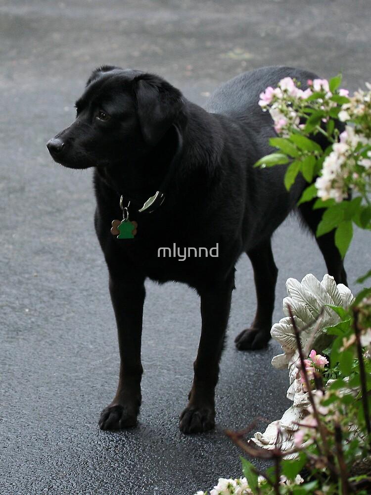 MISS JULIE by mlynnd