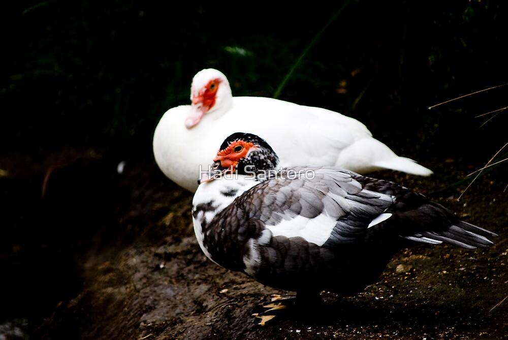 Black and White by Hadi Santoro