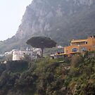 Village and a tree in Capri Italy by Ilan Cohen
