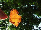 Autumn begins by Themis
