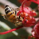 Bees December 2011 by saharabelle