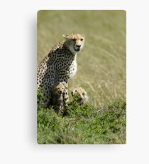 Cheetah mother and two cubs Canvas Print