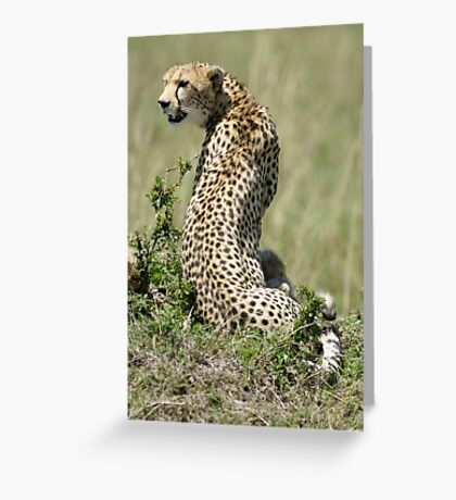 Cheetah in S Greeting Card