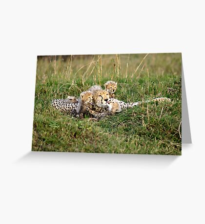 One happy cheetah family: Sita and cubs Greeting Card