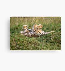One happy cheetah family Canvas Print
