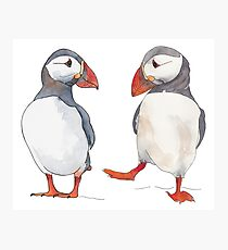 Puffin friends - animal illustration in pen and watercolors Photographic Print