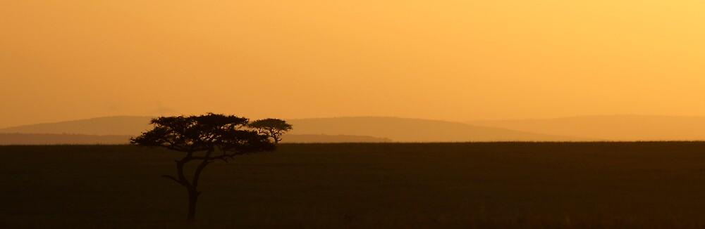 Accacia tree sun rise by Yves Roumazeilles