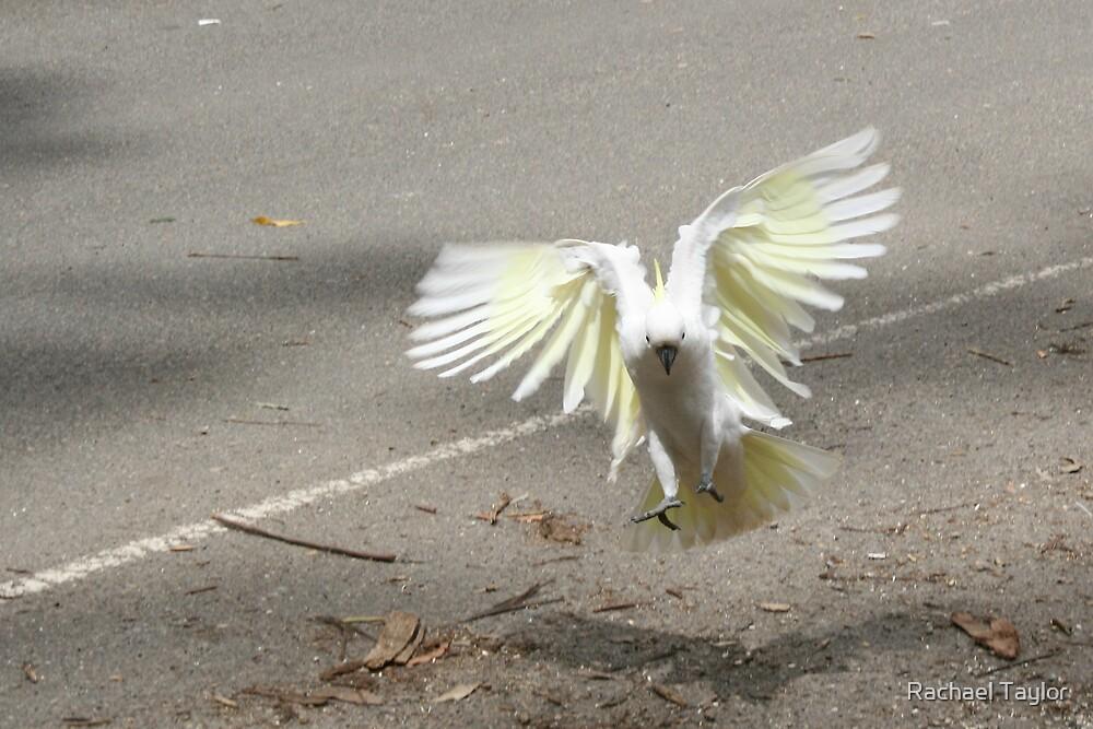 Roadside Landing by Rachael Taylor