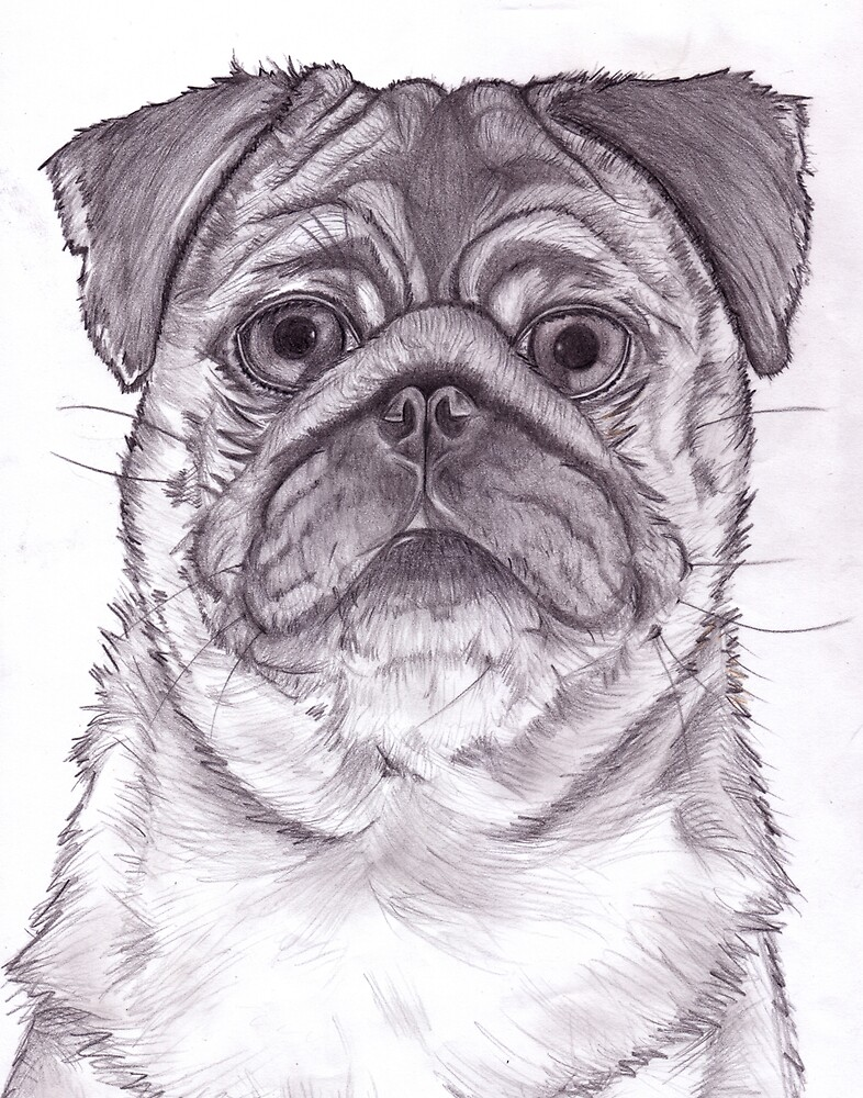 pug by disorder