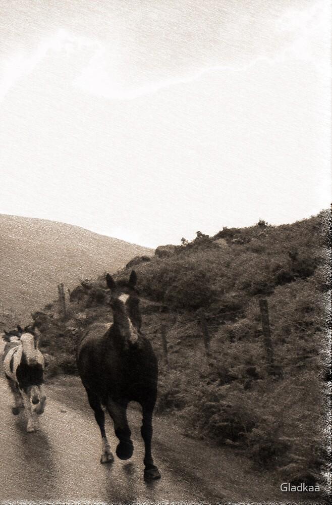 Horses by Gladkaa