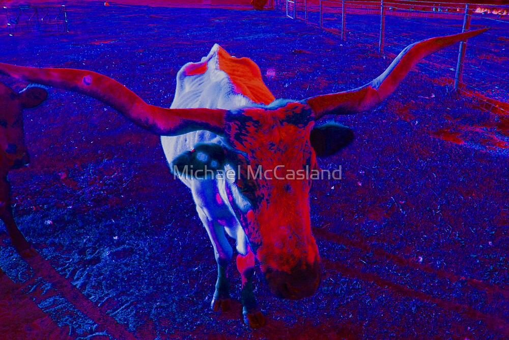 Altered Longhorn Life by Michael McCasland