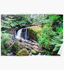 Amphitheatre Waterfall, Noojee Poster