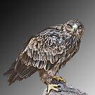 Bird of Prey by dunawori