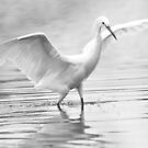 The Dancing Egret by Betsy  Seeton