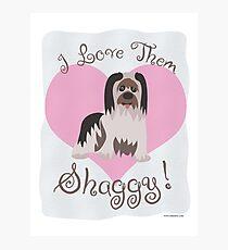 Love Them Shaggy Dogs! Photographic Print