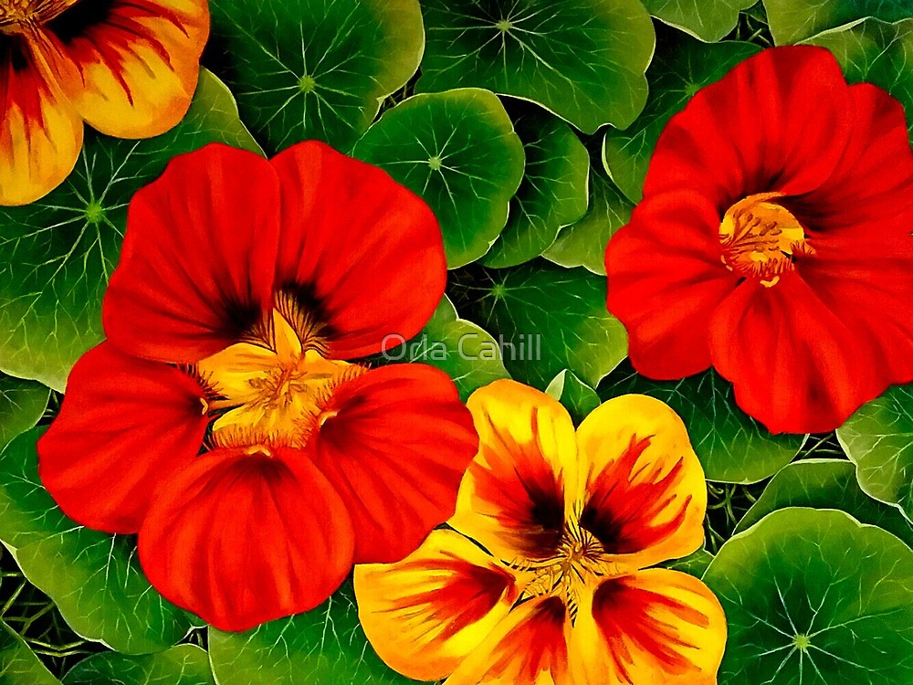 Nasturtiums in Vermillion and Yellow by Orla Cahill
