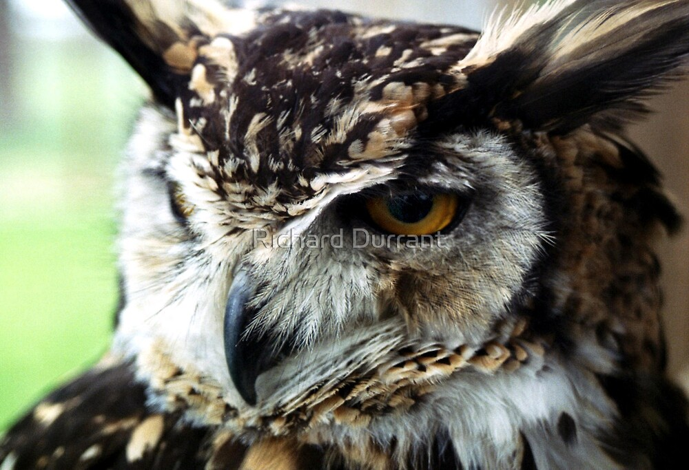 McKinders Eagle Owl by Richard Durrant