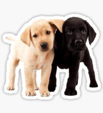 Labrador Puppies Sticker